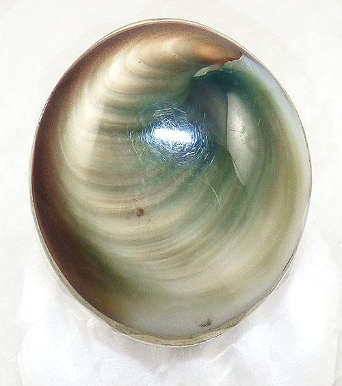 Newly Added Silver Plated Operculum Shell Ring
